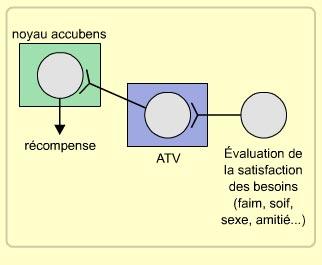 Cerveau-Circuit récompense-simplifié