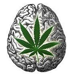 cervea-cannabis